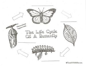 life cycle of a butterfly, butterfly activities, butterfly