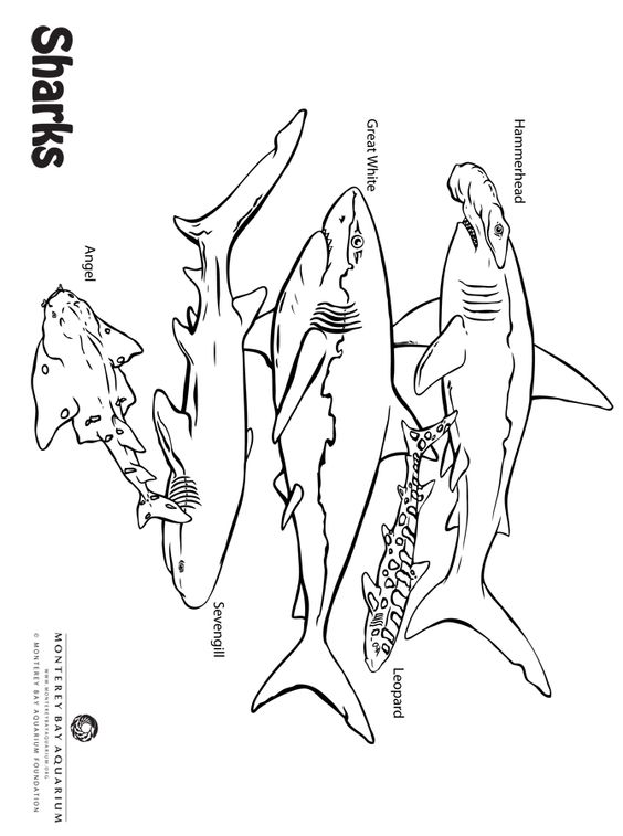 Sea of Sharks coloring page from Monterey Bay Aquarium