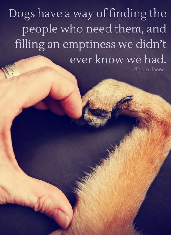Dogs have a way of finding the people who need them, and filling an emptiness we didn't ever know we had. -Thom Jones: