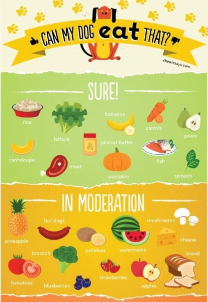 can dogs eat mango infographics