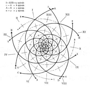 The fibonacci sequence in nature the fibonacci spiral