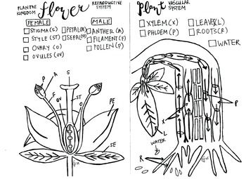 Coloring sheets, Coloring and Biology on Pinterest