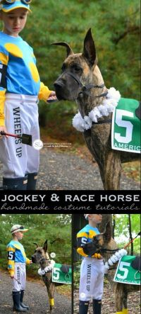 Horse costumes, Race horses and Pet costumes on Pinterest