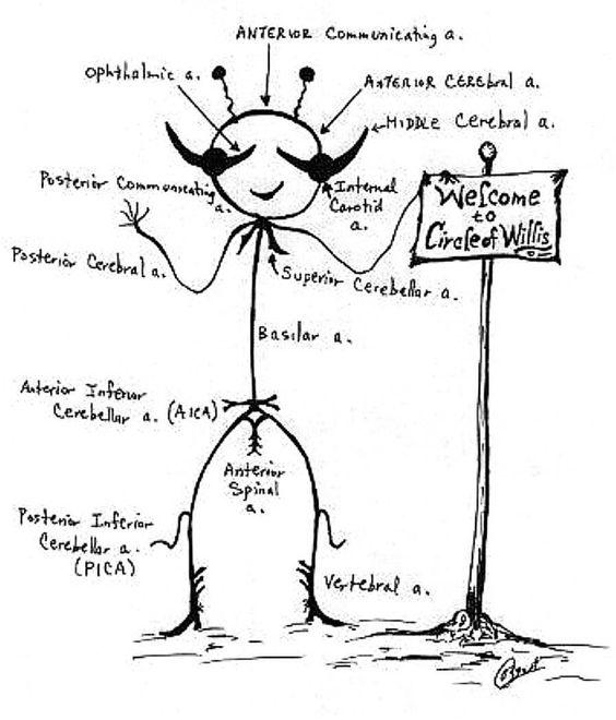 El Polígono o Círculo de Willis ¿cómo no se me ocurrió