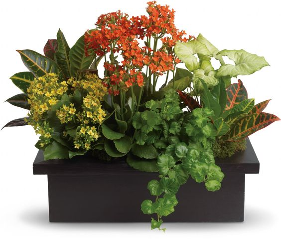 Indoor Container Gardening Exotic Angel Plants How To Choose The