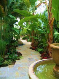 Beautiful backyard walkway with Heliconias, Banana Plants ...