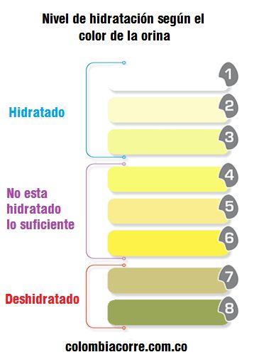 Nivel de hidratación según el color de la orina