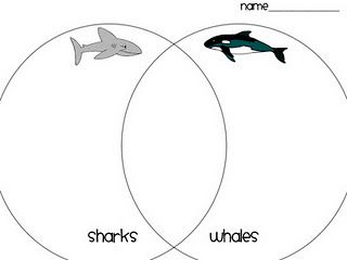 Whales, Sharks and Ocean unit on Pinterest