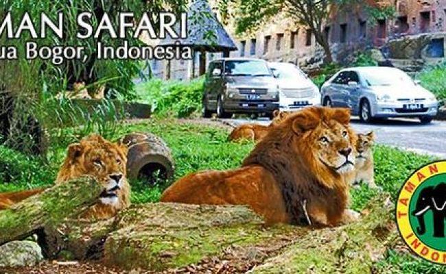 Taman Safari Cisarua Puncak West Java Indonesia Theme