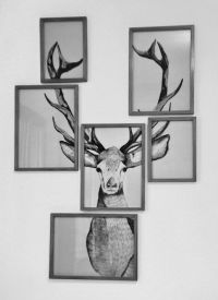 Wall elk art in multiple frames. Can do this with any ...