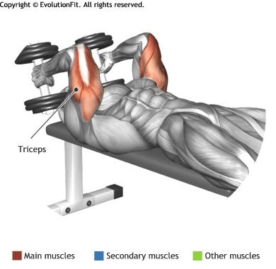TRICEPS LYING DUMBBELL TRICEP EXTENSION Workout