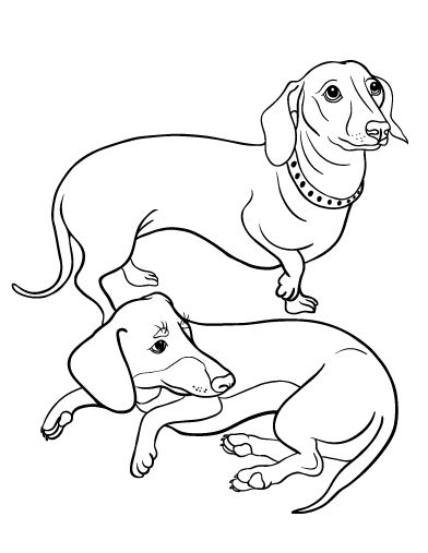 Long Haired Dachshund Coloring Pages Coloring Pages
