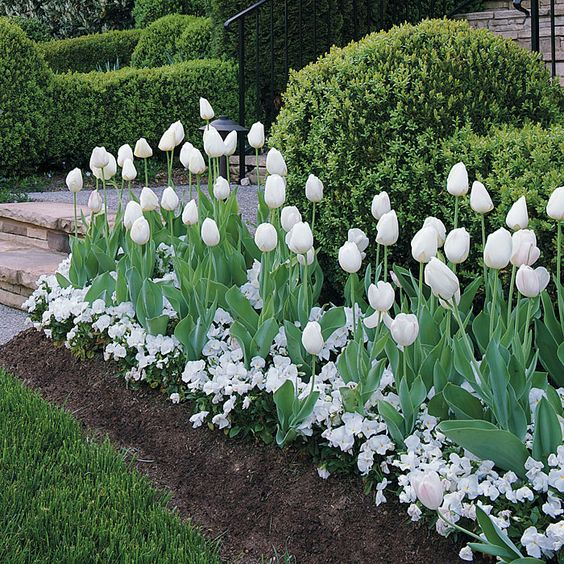 Need to remember...no more buying only a dozen tulips...and other mass planting tips for wow factor.: