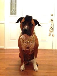 Mr. T dog Halloween costume - I think this should be Bo's ...