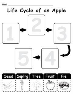 Life cycles, Worksheets and Ordering numbers on Pinterest