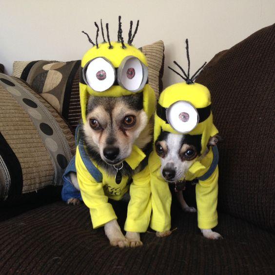 Halloween costumes, Minion halloween and Halloween on