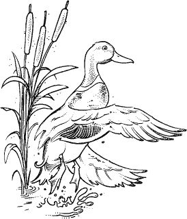 Waterfowl Hunting Coloring Pages Coloring Pages