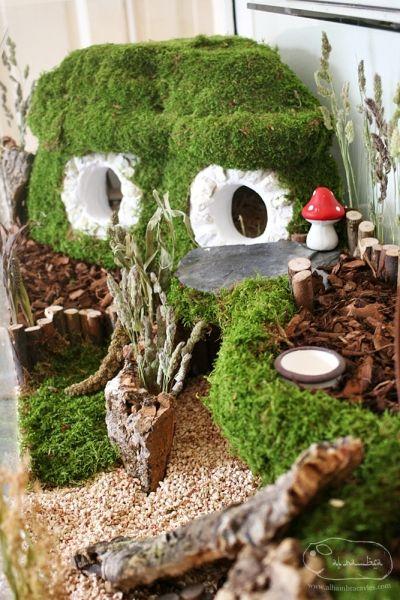 Hamster terrarium  IDEAS  Pinterest  Hamsters