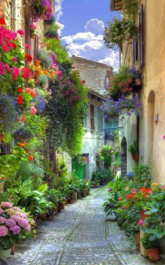 Verona,  Italy, Street Flowers: