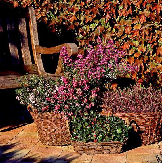 Herbst Pflanzen Und Deko Für Balkon Und Terrasse Pinterest Deko