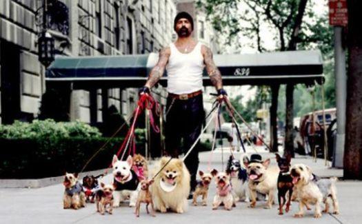Walking Dogs (Credit: Nicole Zalat)