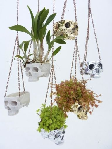 Skull Planter #sobeit #capetown find skulls at http://www.sobeitstudio.com so much more #muizenberg: