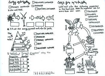 Ecology Coloring sheet ], Food Web ], Energy Pyramid, Food