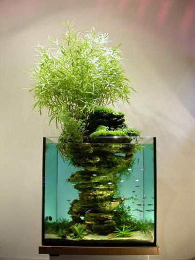 aqua-bonsai, but not by aquabonsai.etsy.com, inspiration ...
