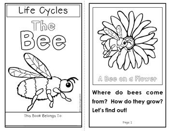 Life Cycles: The Bee {Books and Activities for K-2