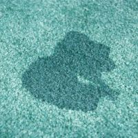 How to Remove Old Urine Stains from a Carpet | Stains, Pet ...