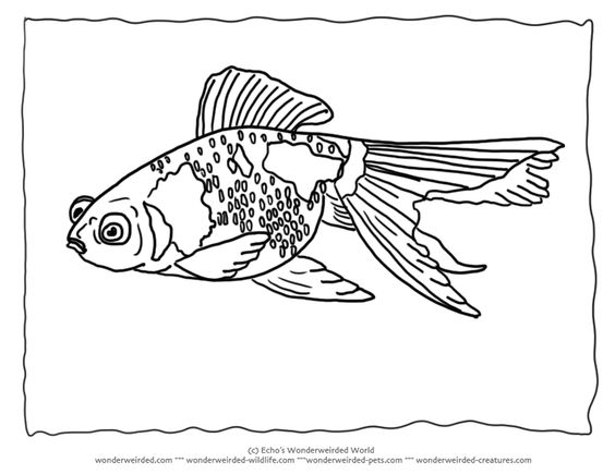 Goldfish Coloring Pages Blank 2 Goldfish Picture to Color