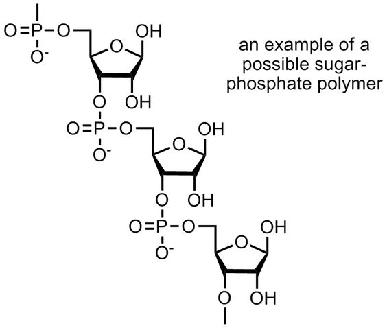 Carbohydrates- A polymer of Carbolhydrates