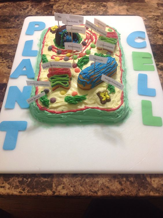 Simple Plant Cell Diagram Science Pinterest