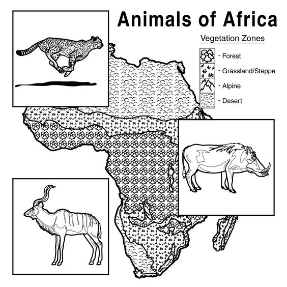 African animals, Habitats and Africans on Pinterest
