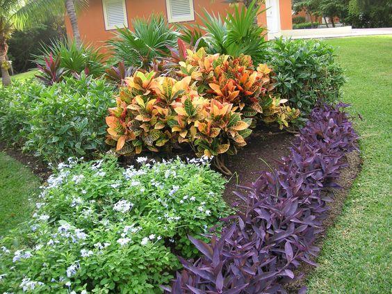 drought tolerant plants tropical