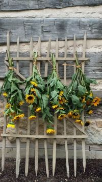 Sunflowers, In the garden and Potting sheds on Pinterest