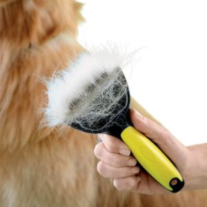 Use dog brush or deshedding to tool to remove excess hair from your dog