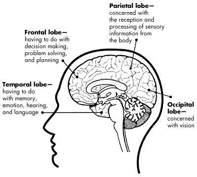 Cerebral cortex, Health and wellness and Principal on