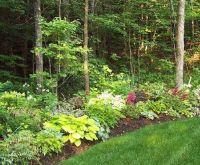 Woodland edge garden design. Like the distinct separation ...