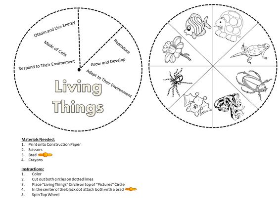 Living and nonliving, Grade 1 and Worksheets on Pinterest