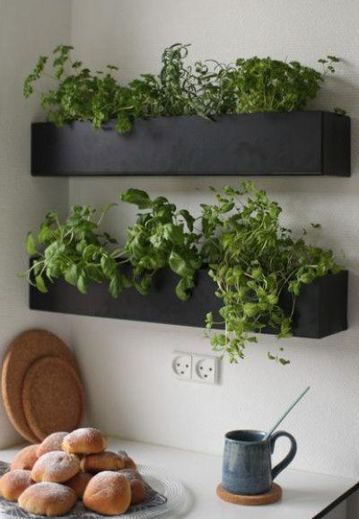 Kruidenplantjes in rechthoekige plantenbakken aan de muur