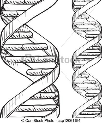 Dna, Double helix and Pencil drawings on Pinterest