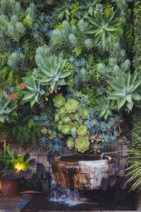 Succulents, water fountain, water element, green wall ...
