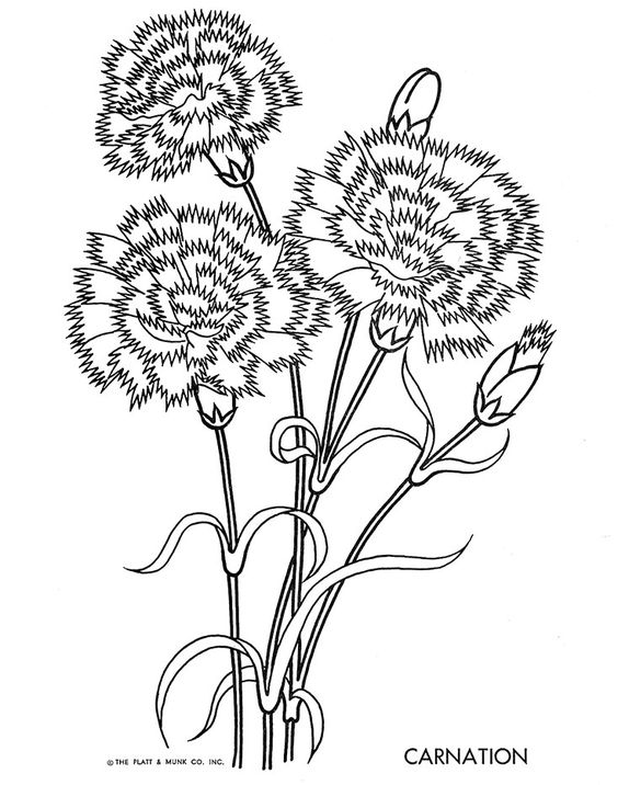Learn To Draw Flowers And Plants Free Floral Coloring
