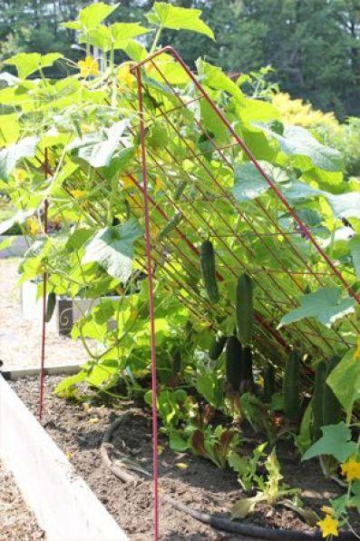 76735d176096366619d6541a0dc2f047 7 Seeds for Your Summer Garden