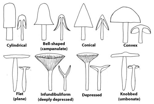 Urban Mushrooms: How to Identify Mushrooms and Where to