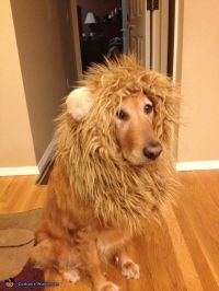 Lion costumes, Lion and Lion costume for dog on Pinterest