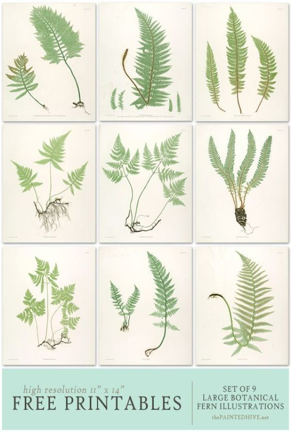 FREE Printable Fern Botanical Illustrations: