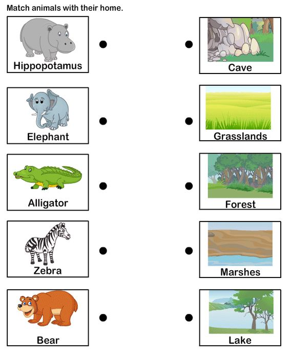 Students could match the animal to its habitat