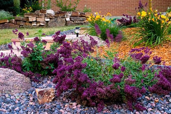 xeriscaping drought tolerant plants